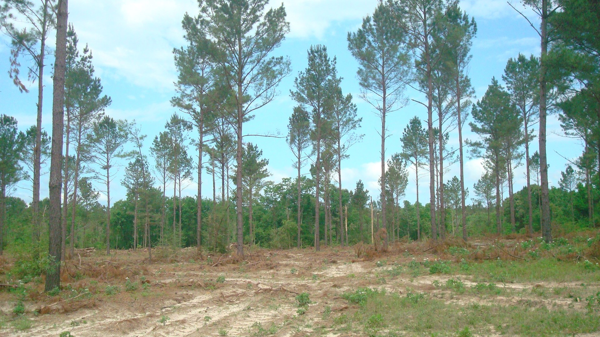 East Texas Recreation Tract For Sale, Rusk County TX
