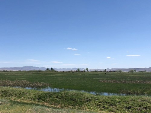 WATERFOWL HUNTING RANCH WATER RIGHTS FOR SALE FALLON NEVADA