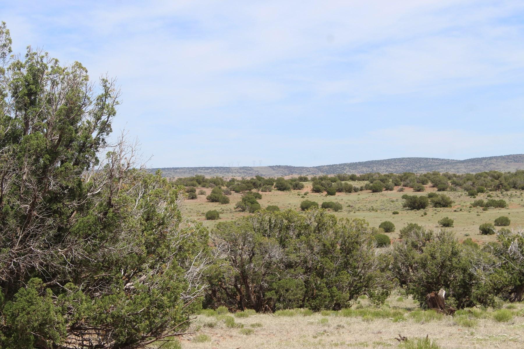 30+Acres in Concho, No HOA, Mountain Views, equine friendly