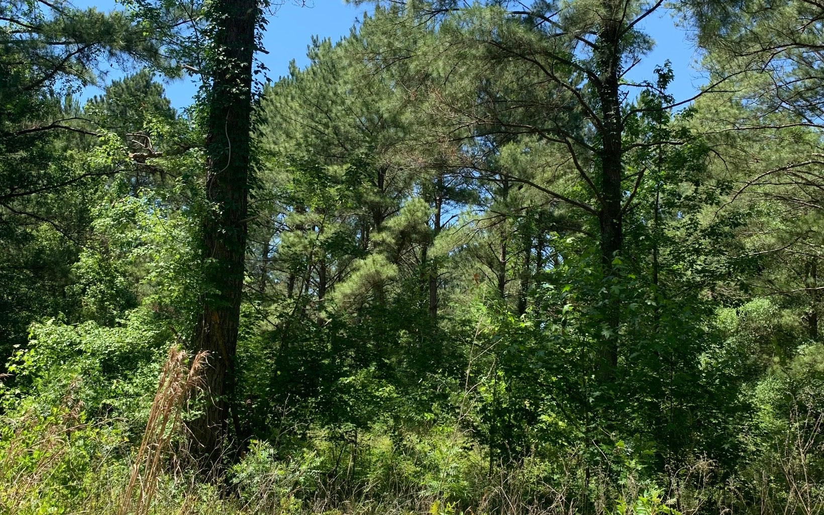 16 acres ready for your home, mobile home or RV!