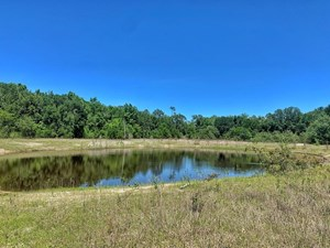 TIMBERLAND AND RECREATIONAL TRACT FOR SALE - MADISON, FL