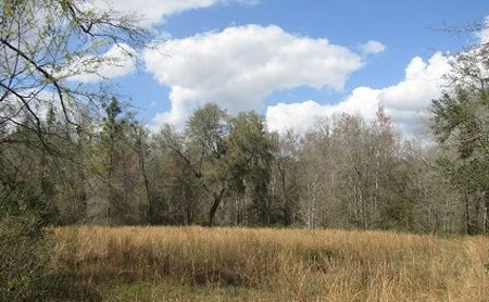 10.05 ACRES FOR SALE IN WELLBORN, FLORIDA