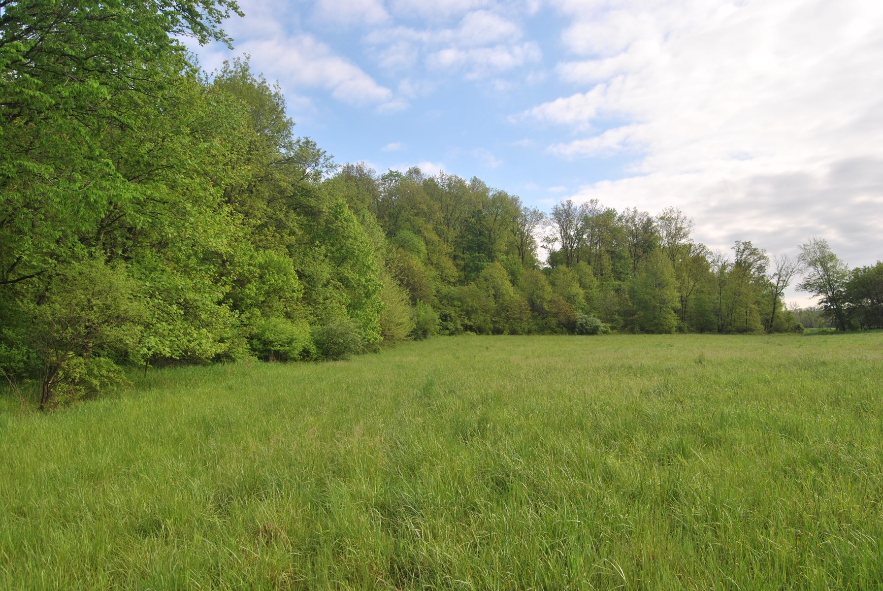 42.17 Acres Hunting Ground, Marshall, IL