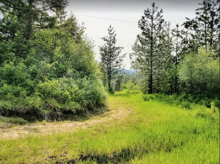 Forested Acreage Near St. Maries, Idaho