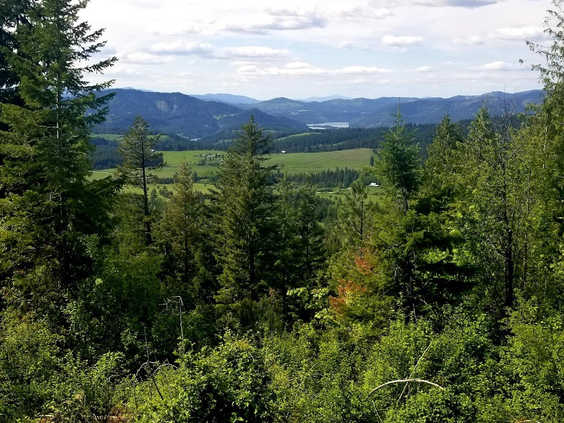 Secluded And Forested Acreage Near St. Maries Idaho
