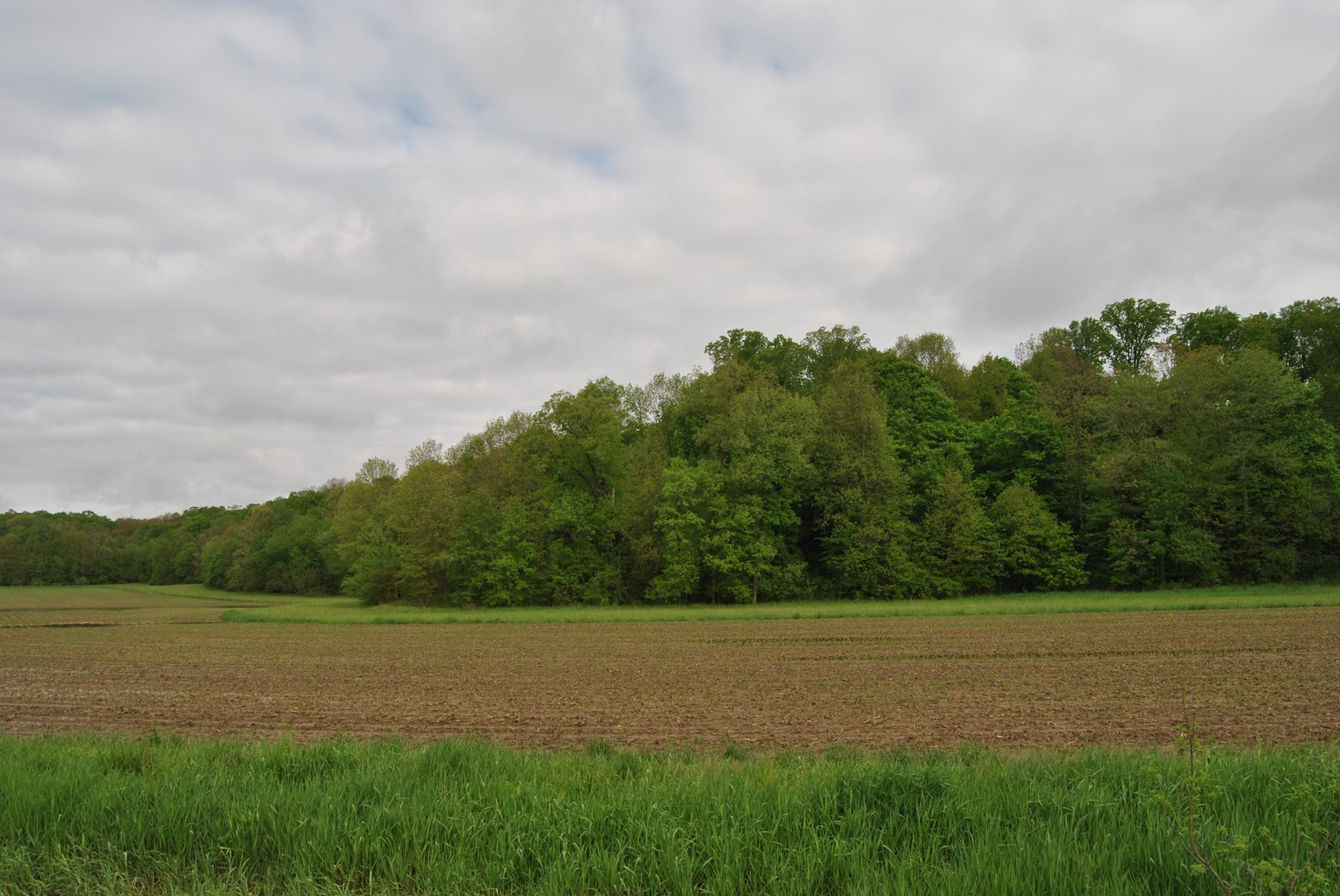 39.10 Acres Hunting Ground, Marshall, IL