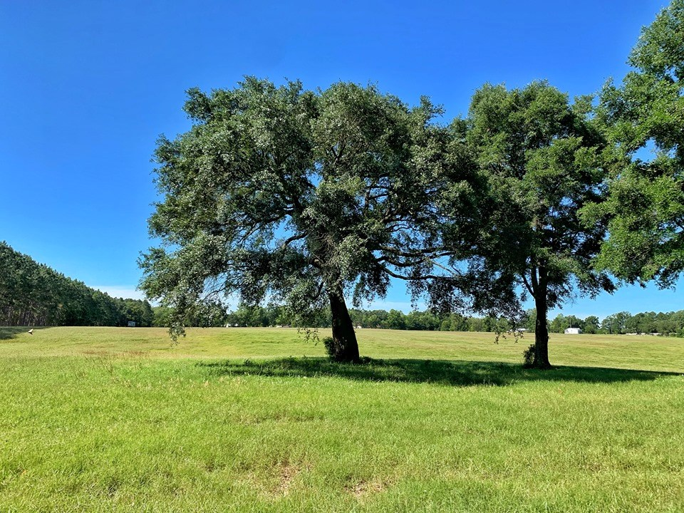 12+ ACRES FOR SALE - TRENTON, GILCHRIST COUNTY, FLORIDA