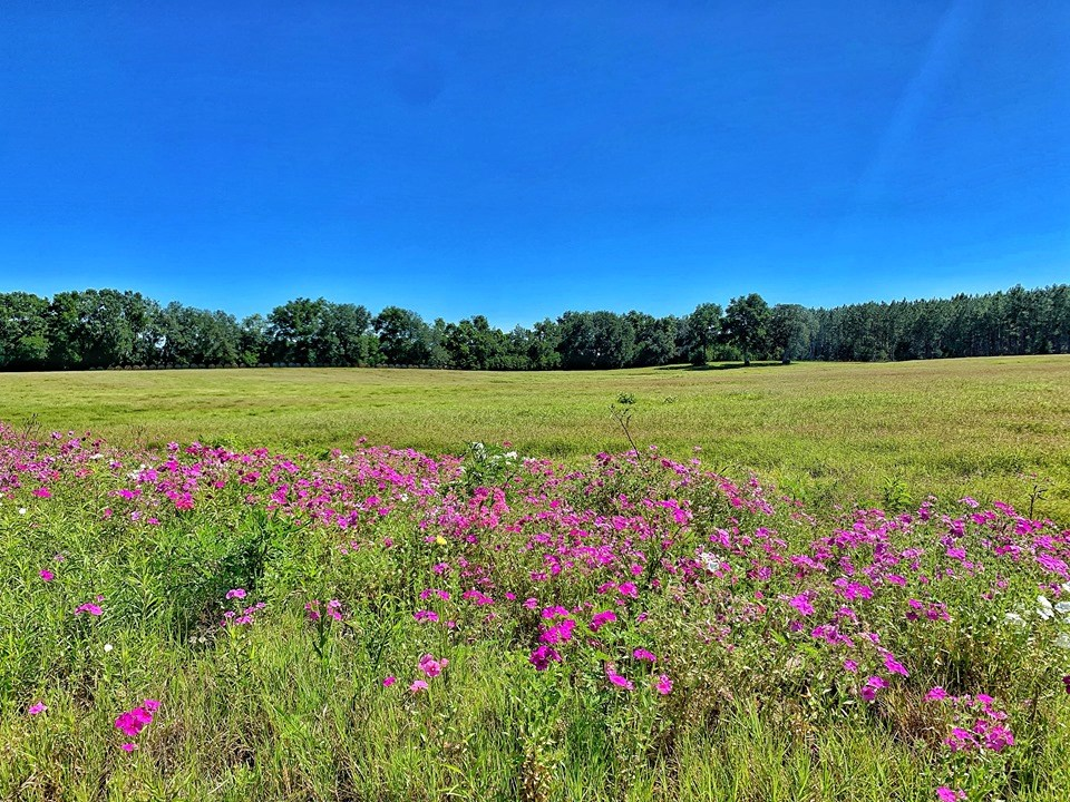 25+ ACRES FOR SALE -TRENTON, GILCHRIST COUNTY, FLORIDA