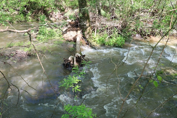 10 ACRES FOR SALE ON A FRESH WATER CREEK IN ZION, AR