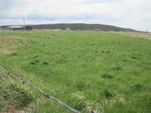 NORTHERN NM HORSE PROPERTY FOR SALE IRRIGATION RIGHTS FENCED