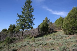NORTHERN NM PROPERTY FOR SALE
