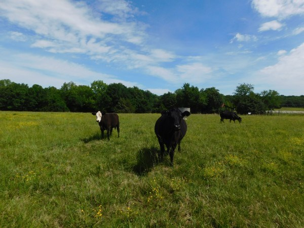 Oklahoma cattle ranch for sale