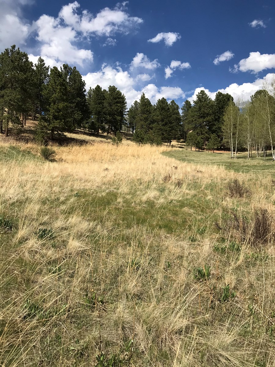 Beautiful Mountain Property for Sale, Woodland Park, CO