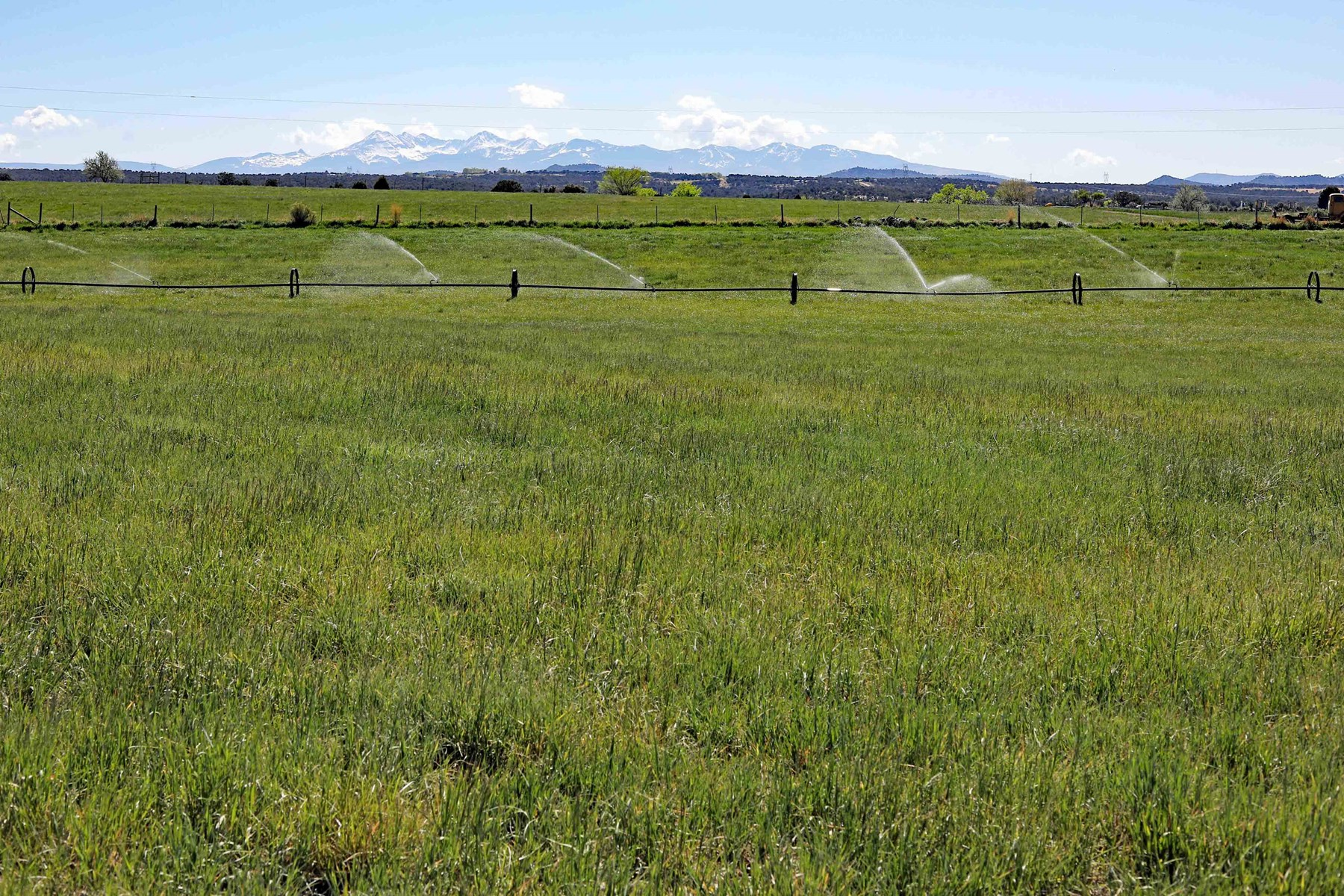19 fenced acres with 19 shares of irrigation in Dolores, CO