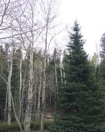 Beartrap Creek Runs Through this Beautiful Mountain Lot