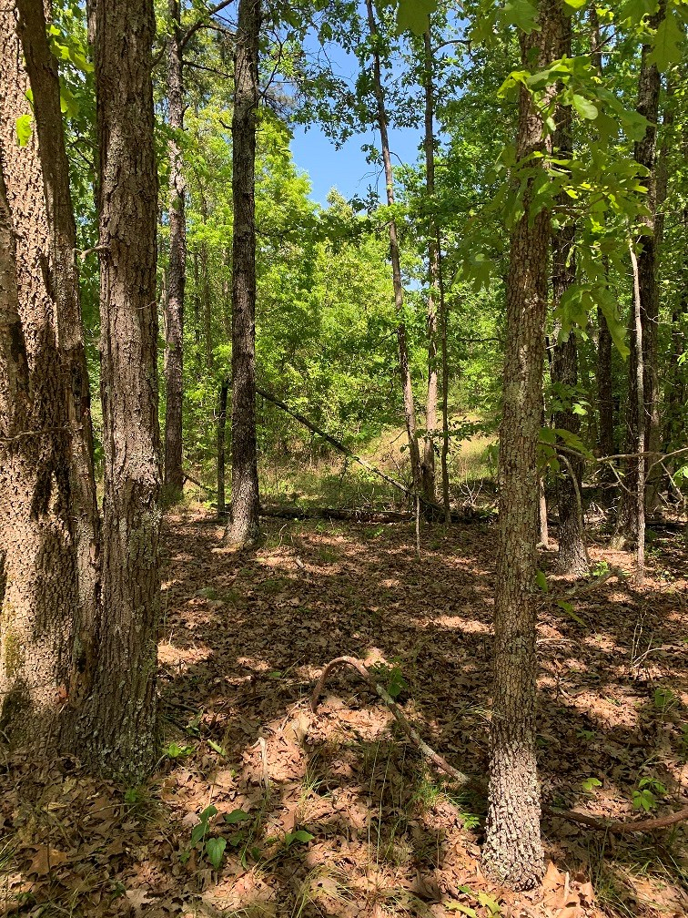 ACREAGE TRACT FOR SALE ON THE OUTSKIRTS OF MELBOURNE, AR