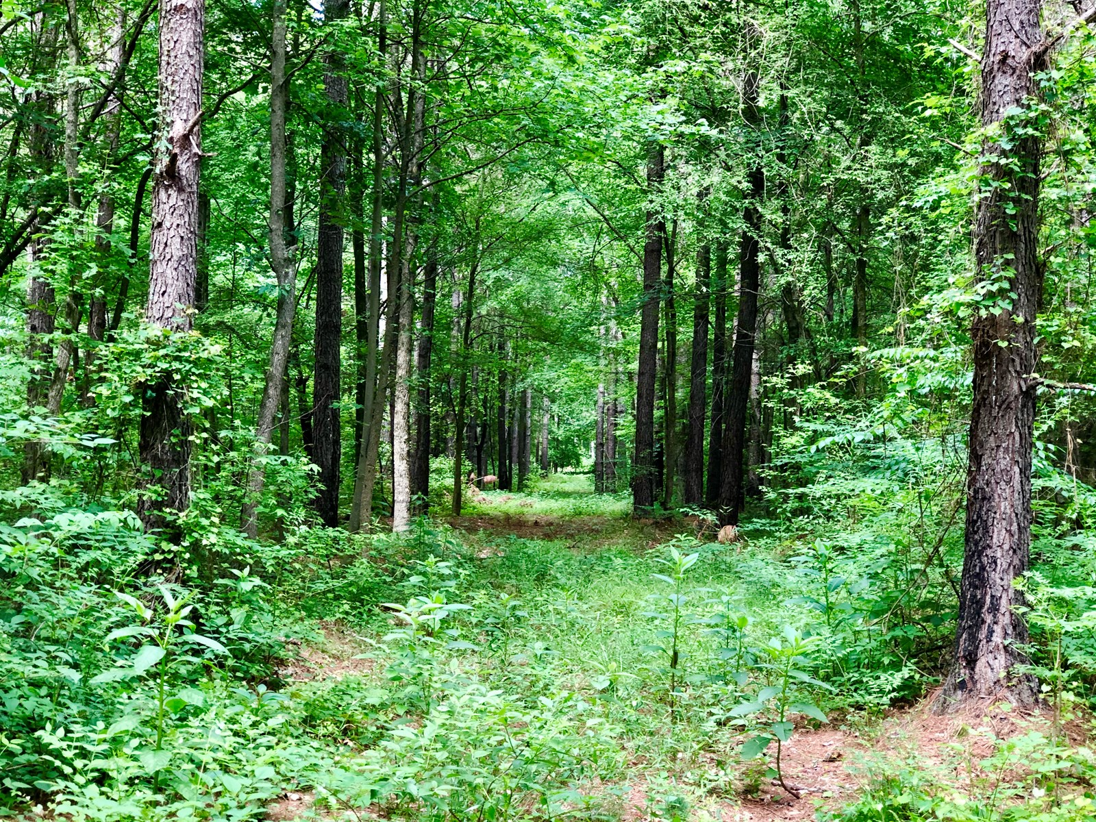 Hunting/Timber Tract for sale in Northampton County, NC