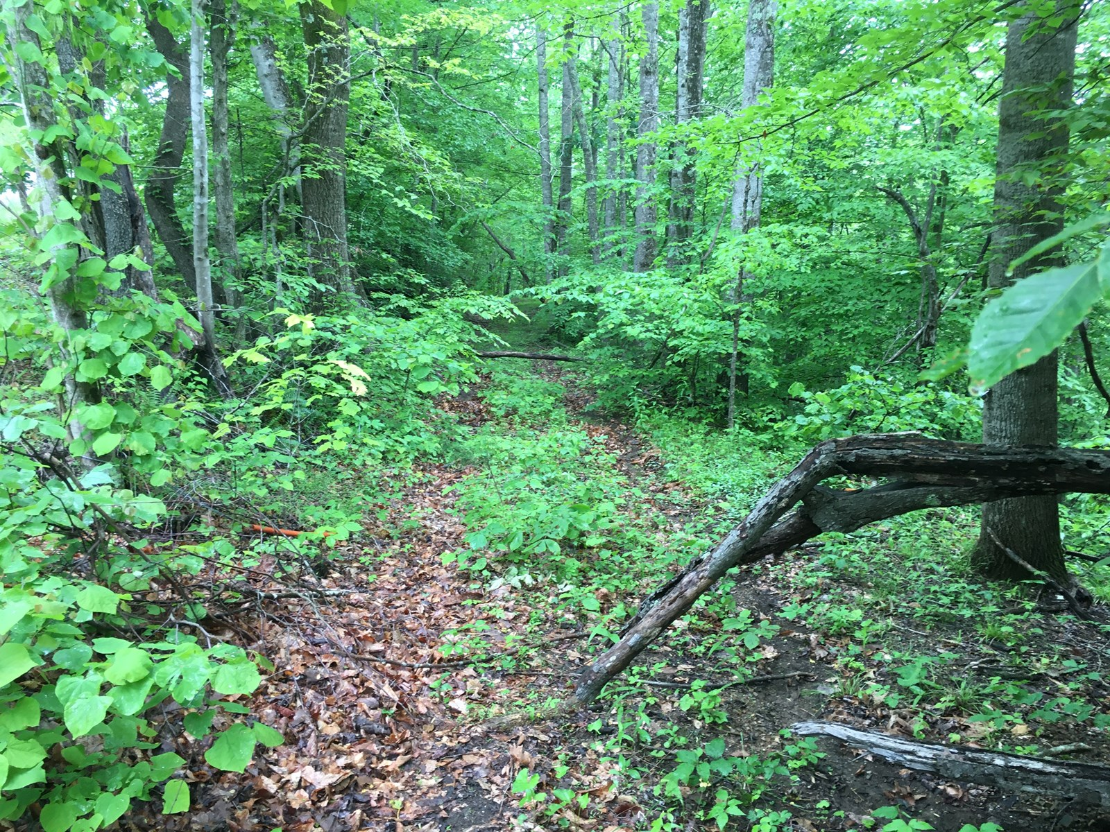 Land for Sale in Franklin County VA