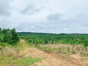 20 ACRES MS TIMBERLAND HUNTING PROPERTY FOR SALE SW MS