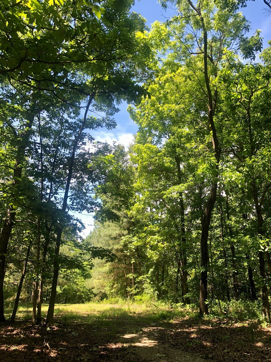 ACREAGE FOR SALE IN AR