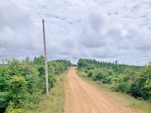 316 ACRES MS TIMBERLAND INVESTMENT PROPERTY FOR SALE SW MS
