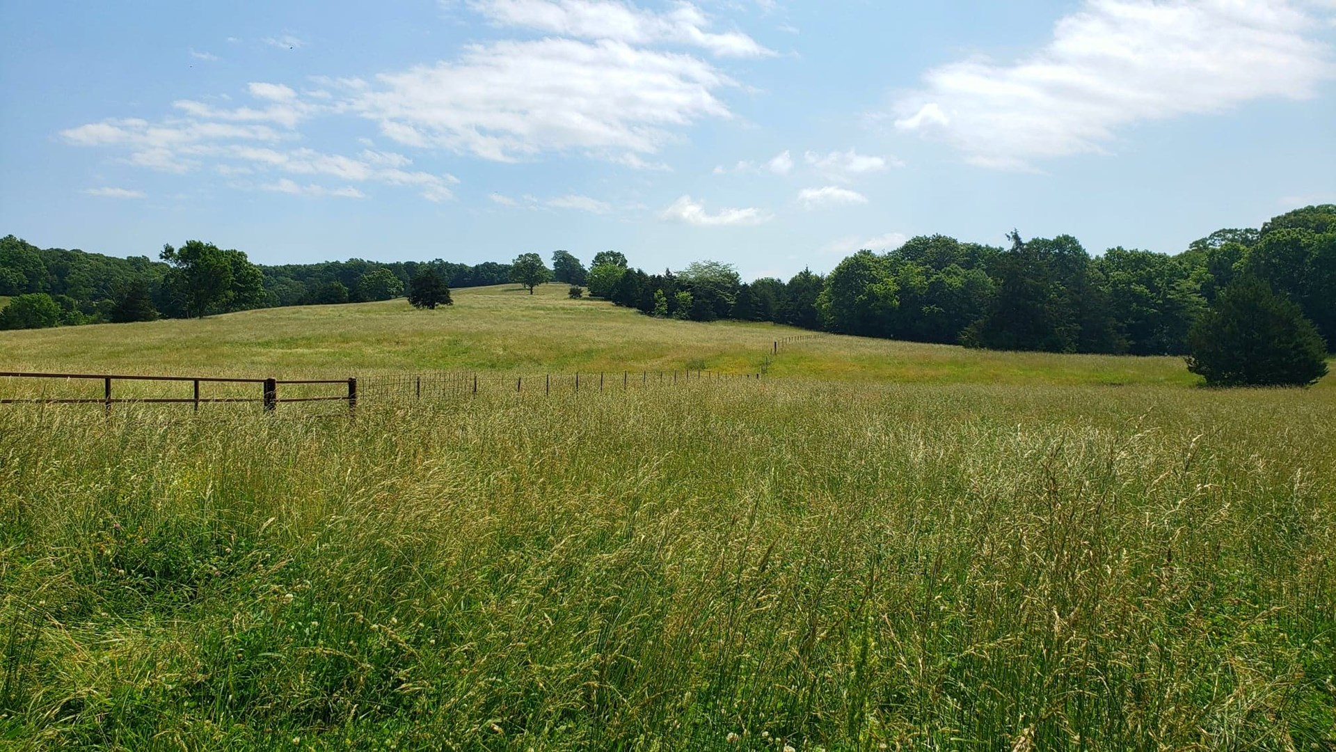 Pasture Ground with Water For Sale in Southern MO Ozarks