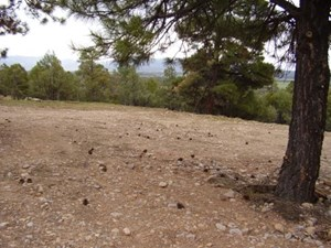NORTHERN NM MOUNTAIN PROPERTY FOR SALE