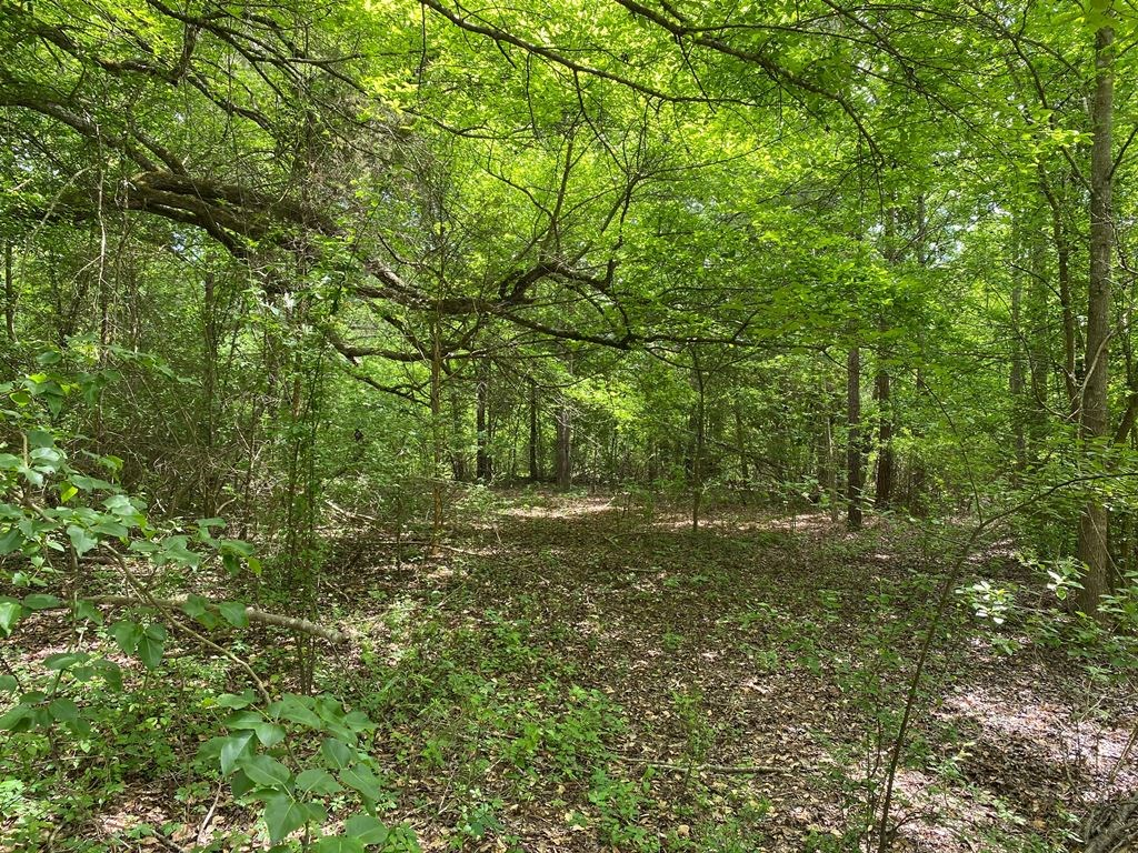22 PRIVATE WOODED ACRES NEAR LAKE PALESTINE