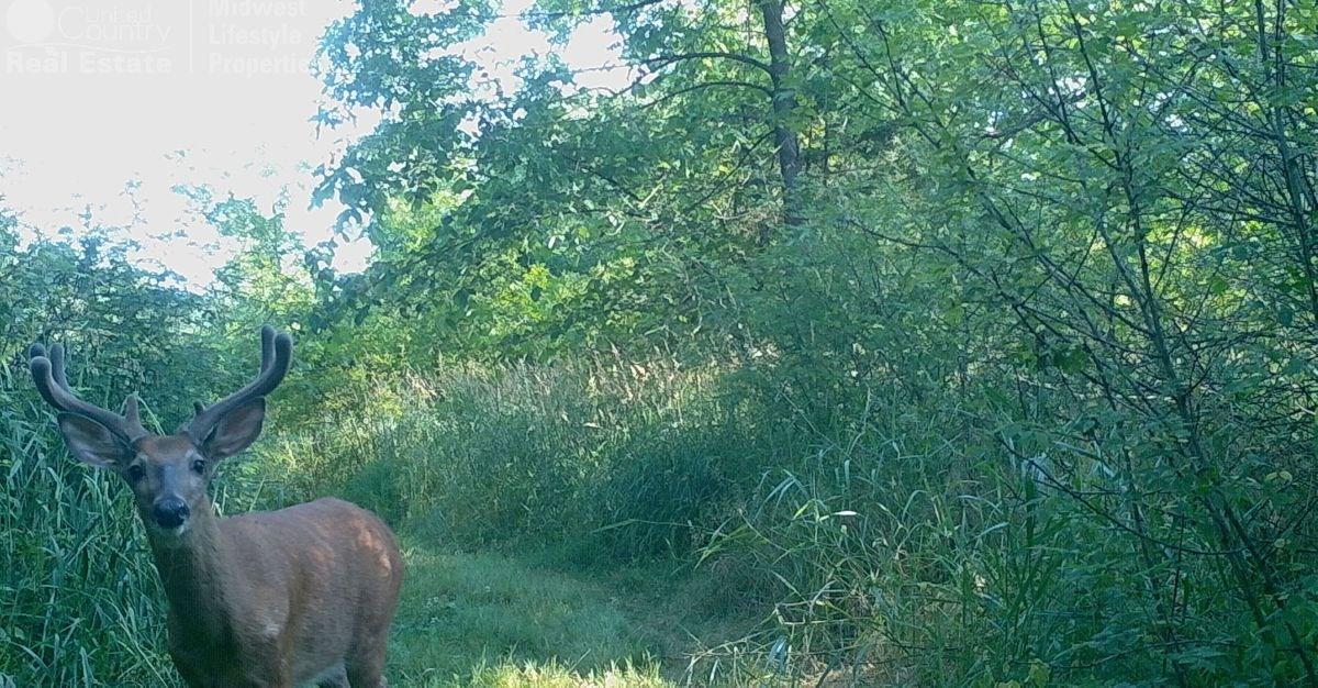 Wildlife Haven Along Kickapoo River in Southwestern Wis
