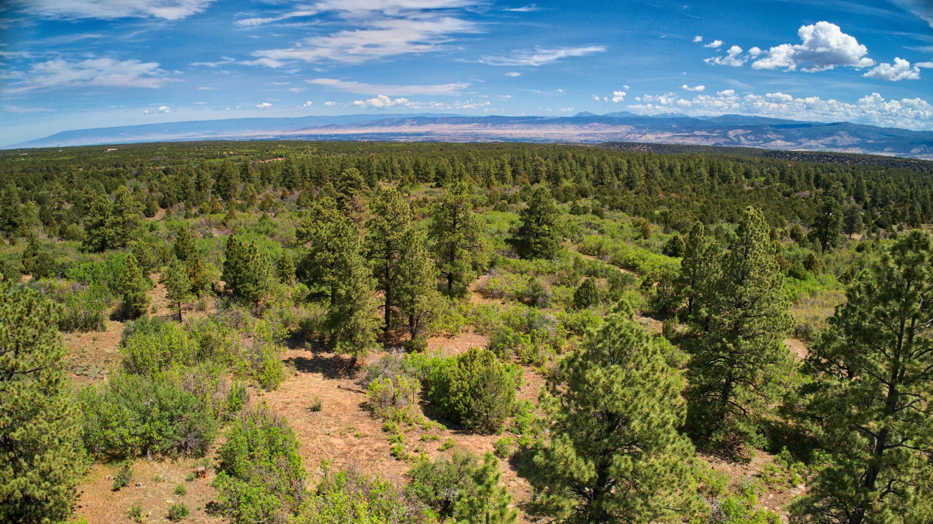 40 acre secluded homesite/recreation property with views