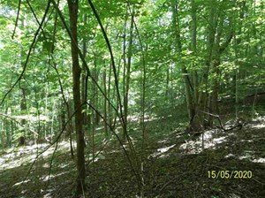 8.51 ACRES WOODED LAND FOR SALE IN HANCOCK CO., TN