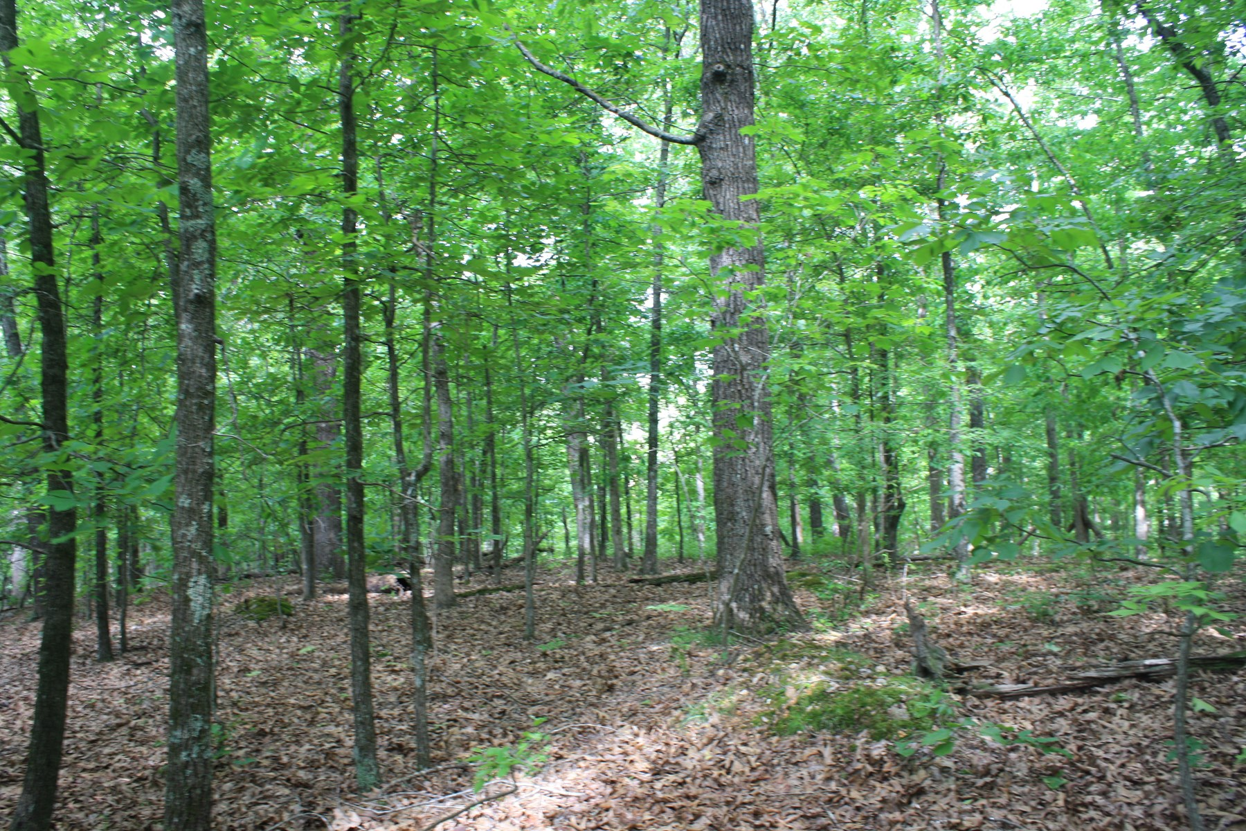 Wayne County Missouri land for sale