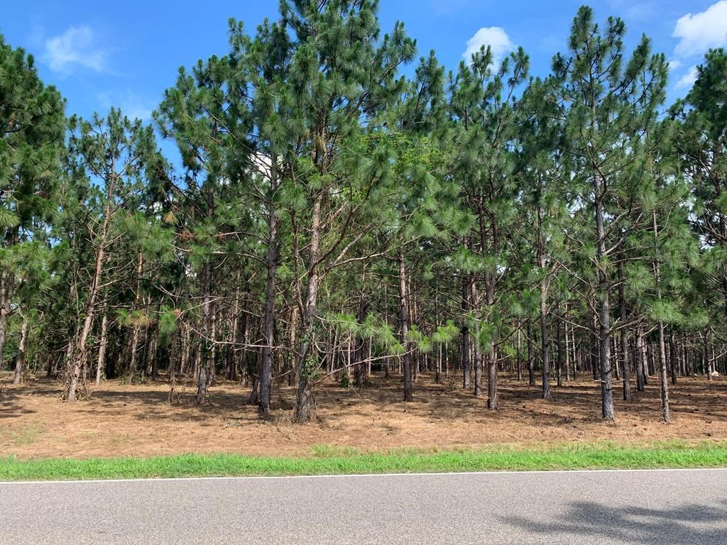 Land For Sale in Geneva County, Alabama
