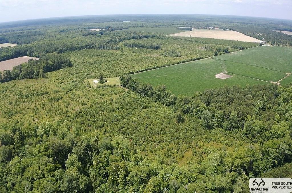 Crocketville Hampton Longleaf Pine Hunting Land