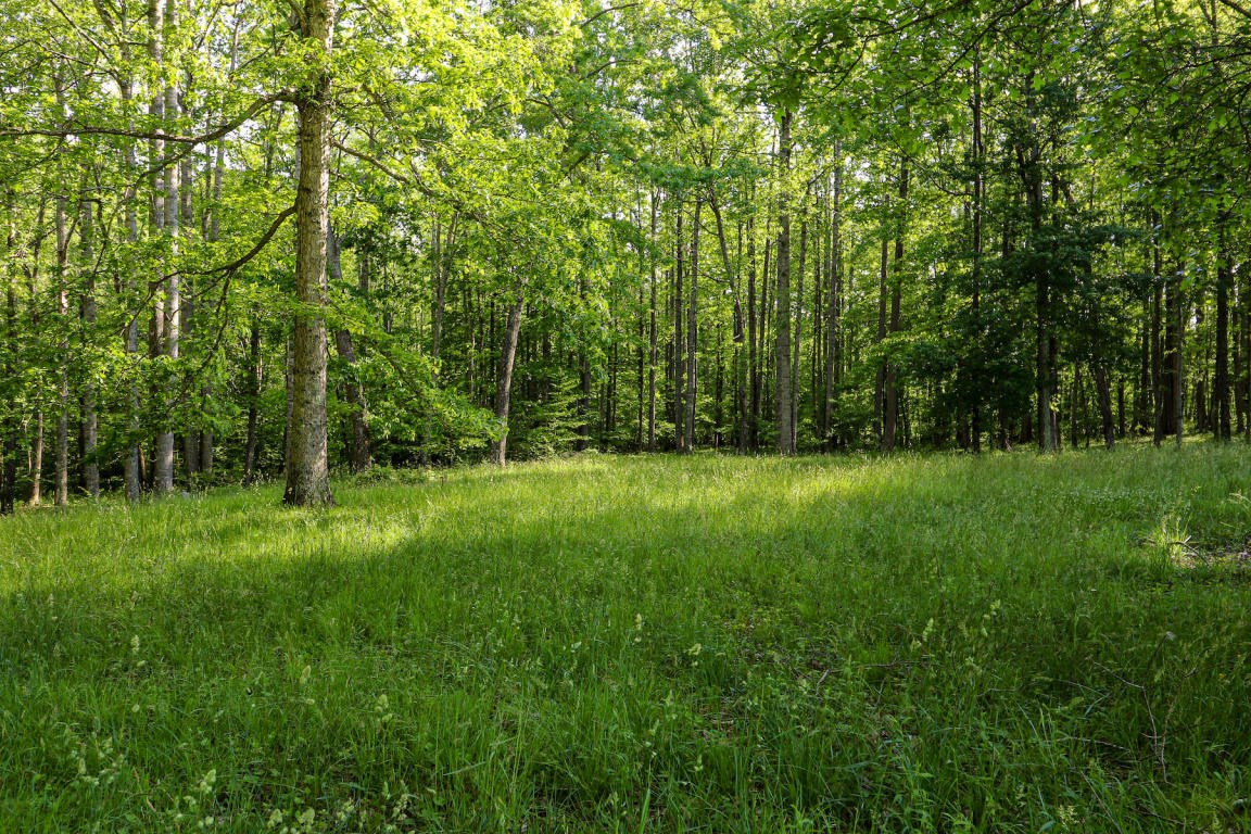 Land for Sale in Willis VA
