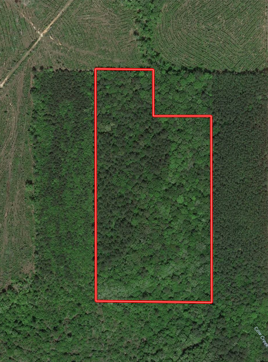 HUNTING LAND IN JACKSON PARISH LOUISIANA FOR SALE