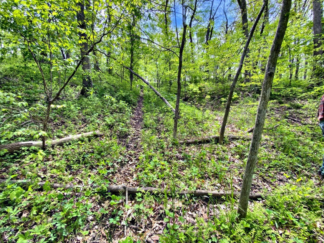 Affordable Hunting Tract, with Mature Oak Timber