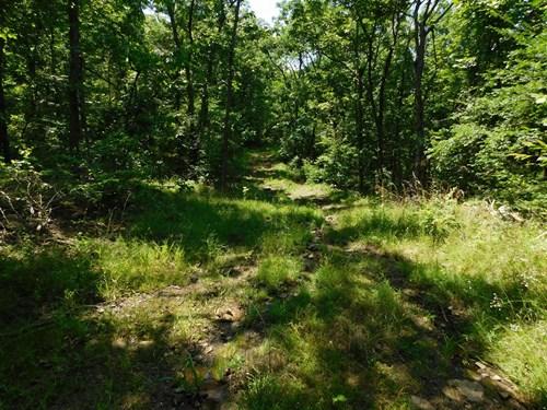 Wooded Timberland Acreage Near Buffalo River National Park