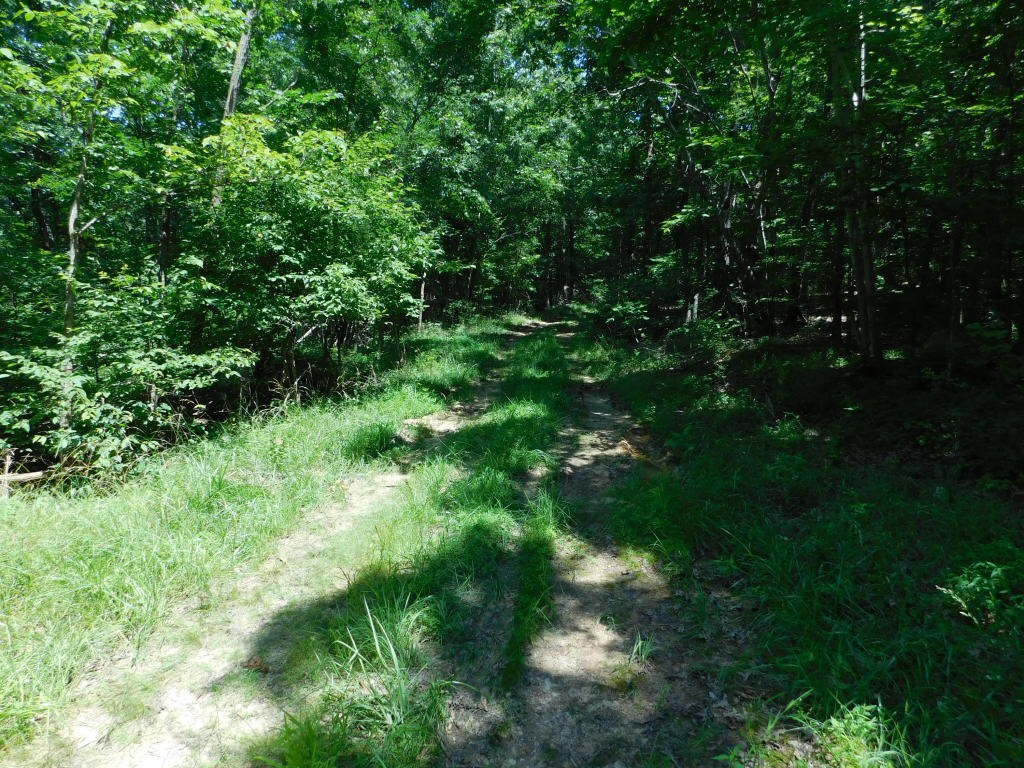 Building Sites 12 Wooded Timberland Acres Newton County