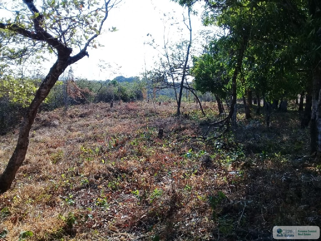 land for sale panama