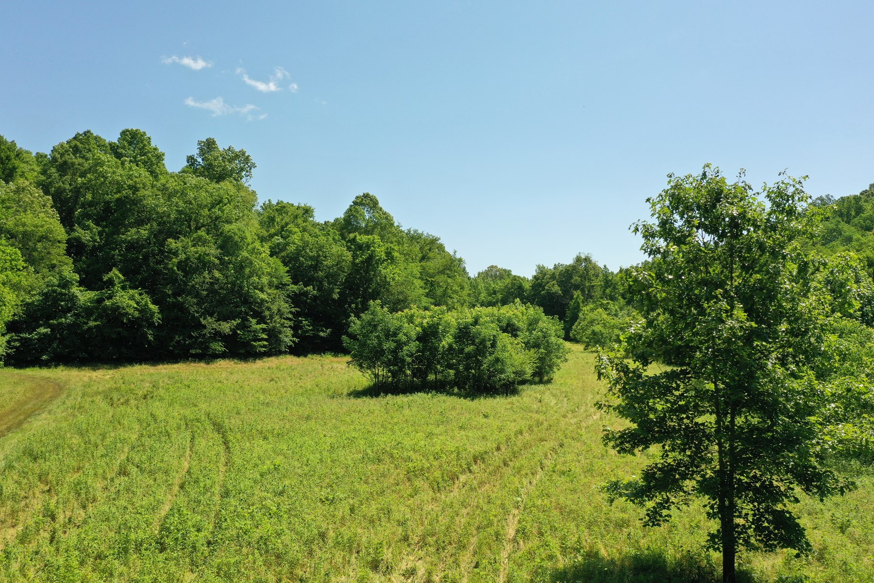 Land with creek and spring for sale