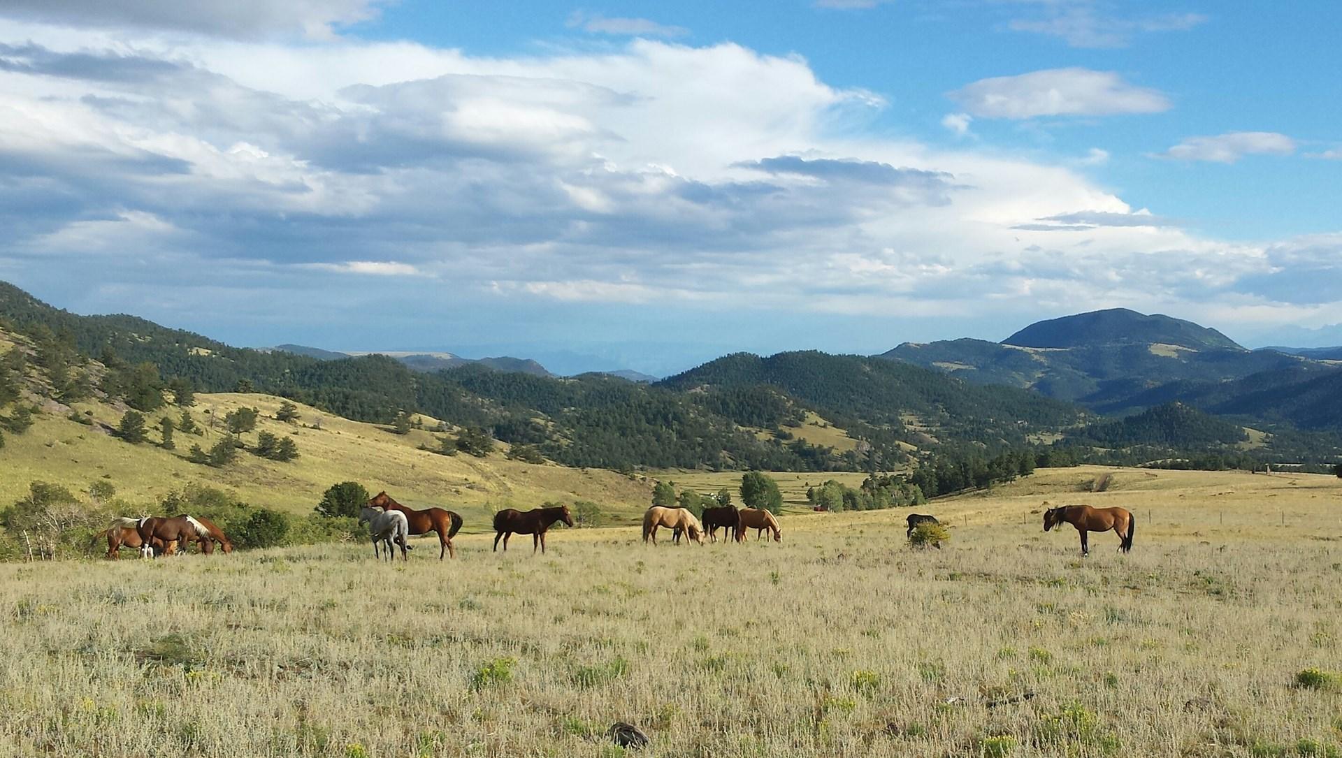 Central Colorado Equestrian Ranch: 444 Acres & Water Rights
