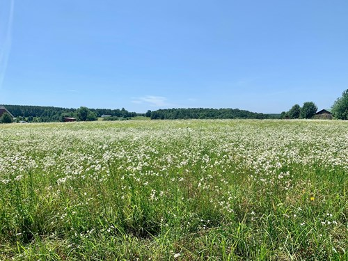 Prime Farming or Building Land for Sale, in Summertown TN