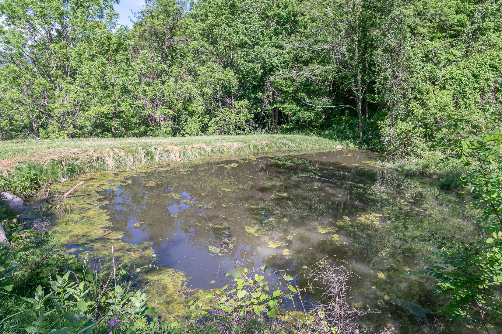 Turkey Foot Pond