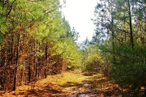 26+ ACRES HUNTING LAND/HOMESITE FOR SALE IN SW MS