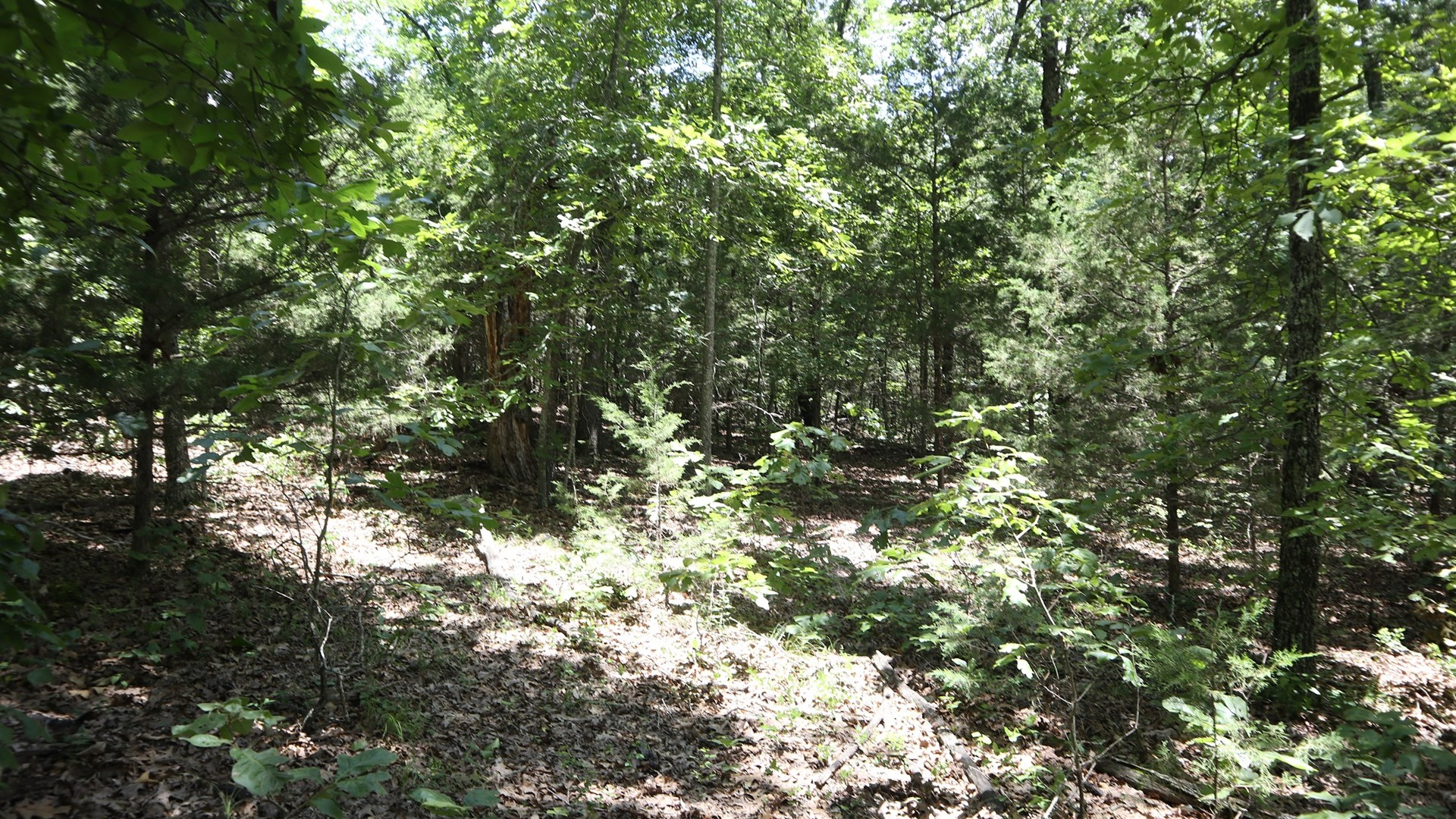 Wooded Acreage for Sale in Fulton County Arkansas