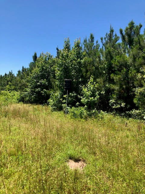 153 ACRES MANAGED TIMBER LAND 30 MILES SW OF TEXARKANA