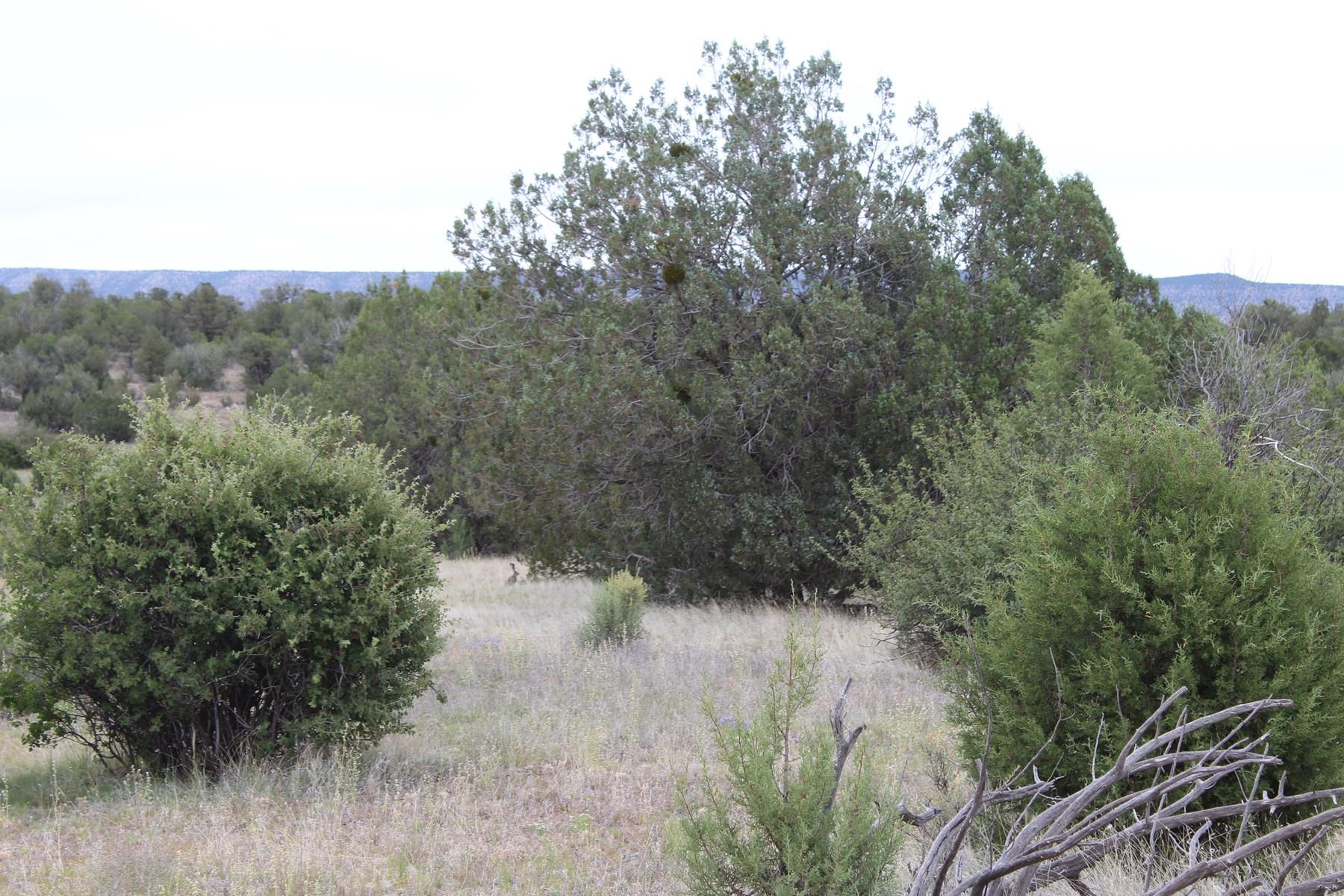 Rural Mountain Acreage that borders State Trust Land Arizona