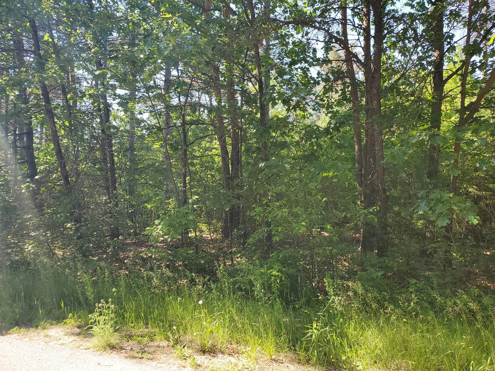 Vacant Land for Sale in Portage County, Waupaca, WI