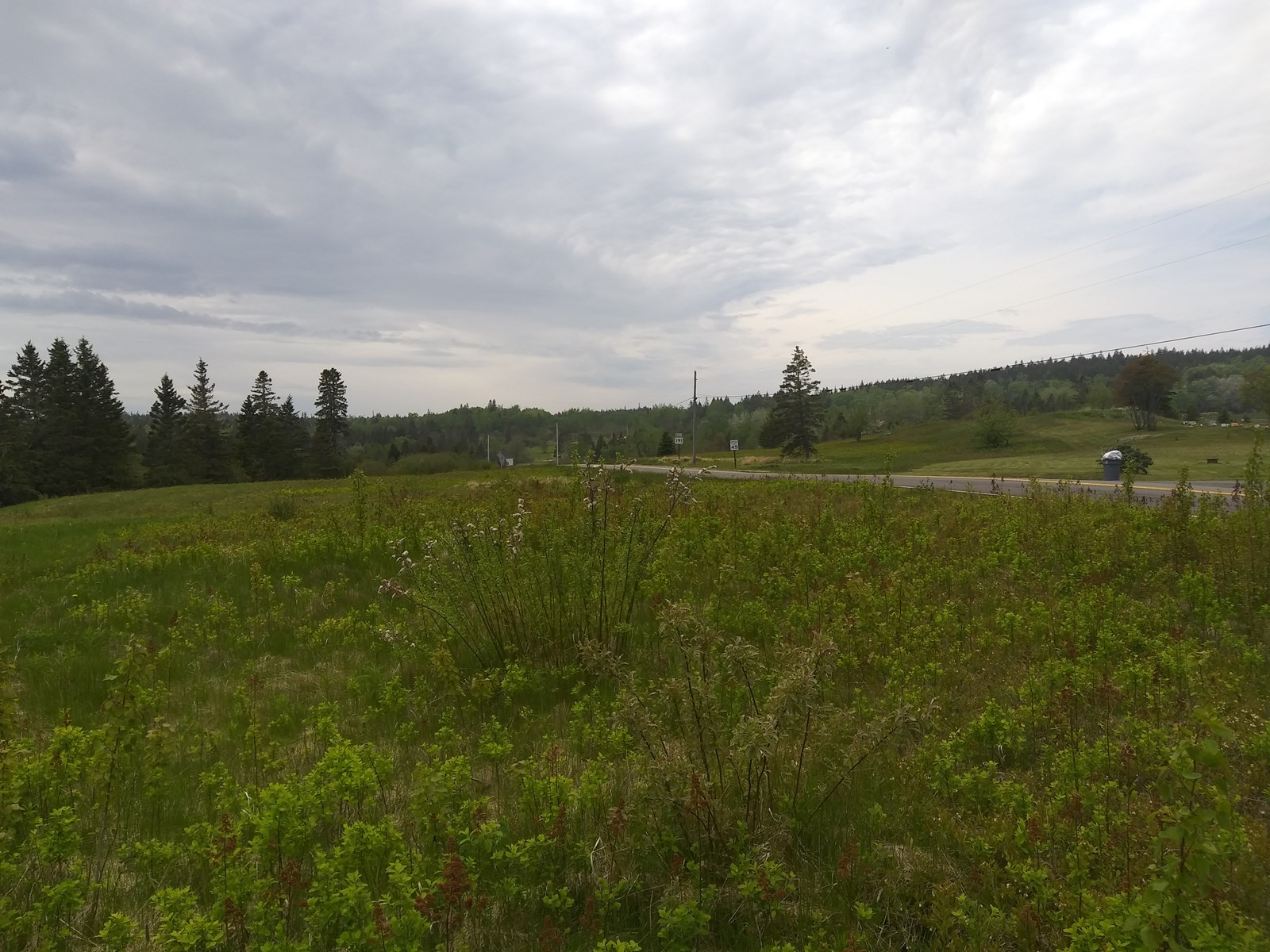 Oceanfront Land For Sale in Trescott, Maine